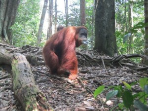 Bukit Lawang