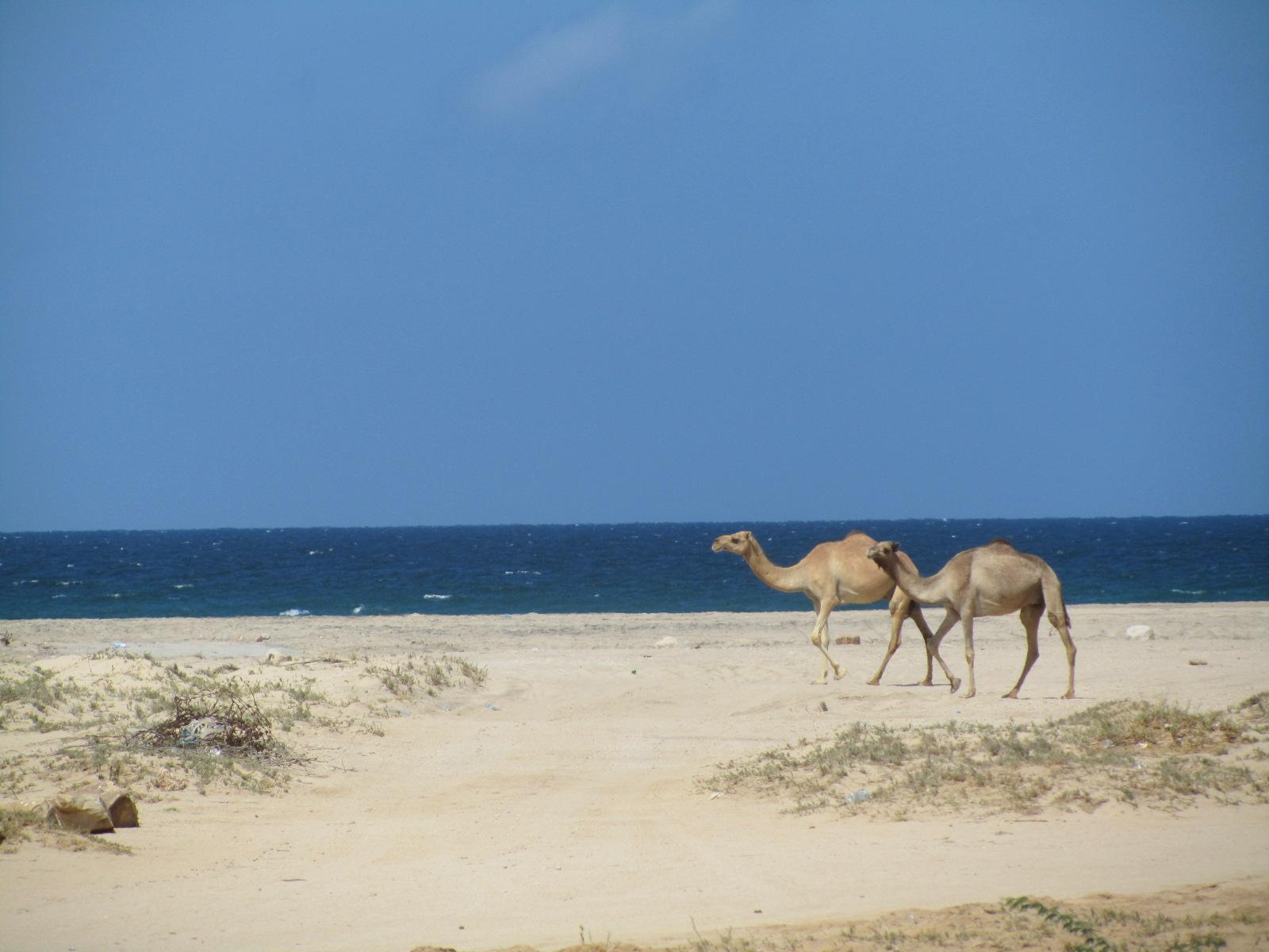Beaches of Berbera